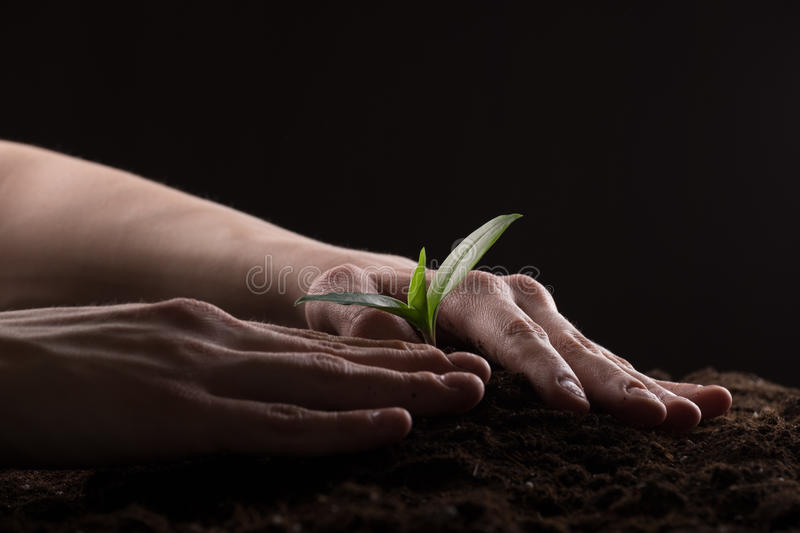 Sprout in ground. Man care about green young sprout growing in good brown soil. New life concept royalty free stock photography