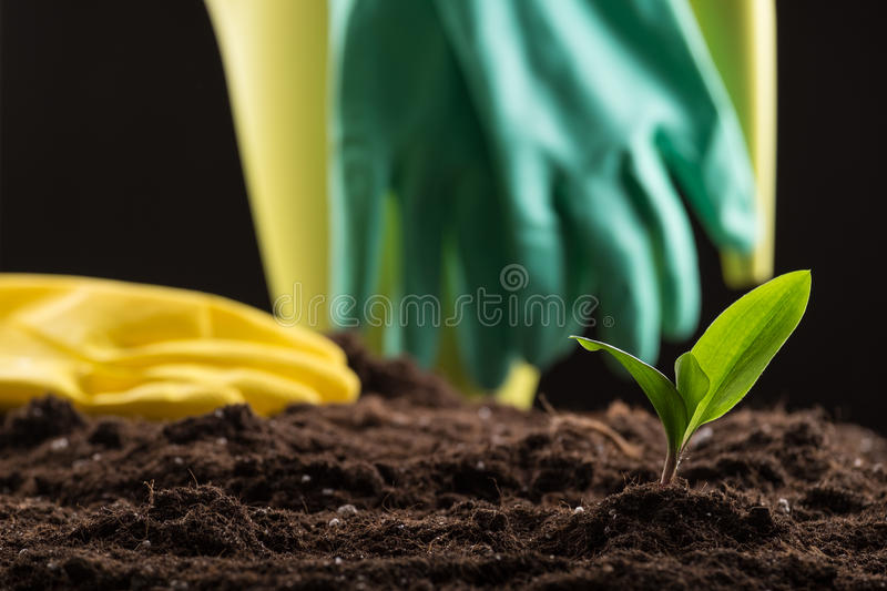Sprout in ground stock image