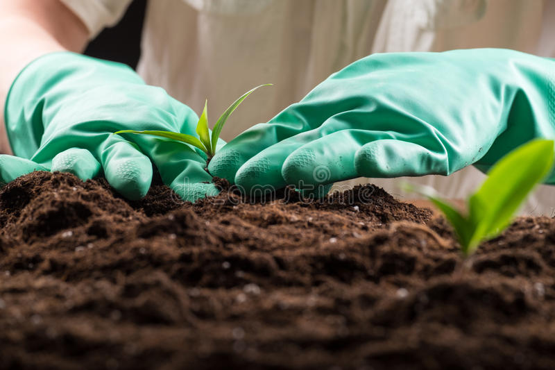 Sprout in ground. Man in green rubber gloves care about green young sprout growing in good brown soil. New life concept royalty free stock photography