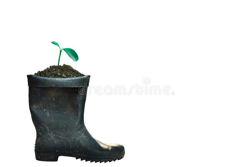 Sprout growing in boot. Nature and care concept royalty free stock photo