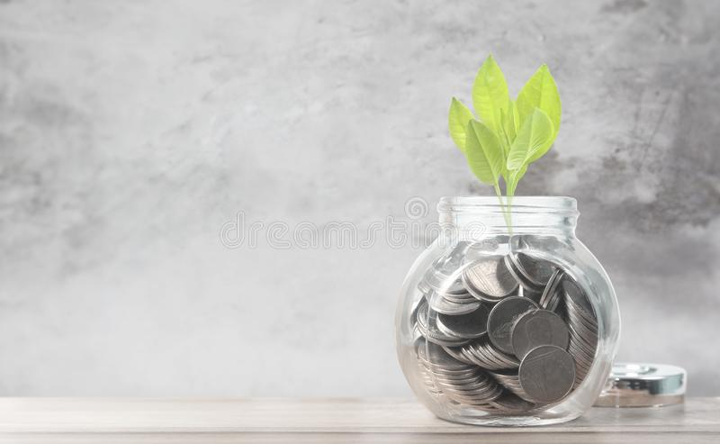 Sprout growing on glass piggy bank saving money concept,and coins stock photography