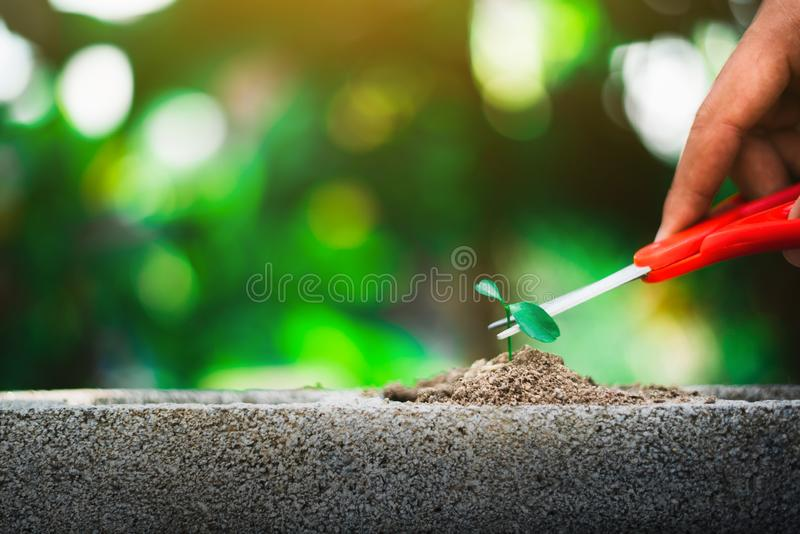 Sprout growing on ground and hand holding scissor going to cut it. Destroy new life and hope concept royalty free stock images