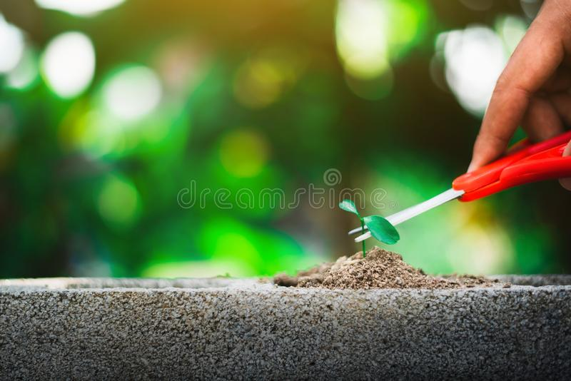 Sprout growing on ground and hand holding scissor going to cut it. Destroy new life and hope concept stock photo