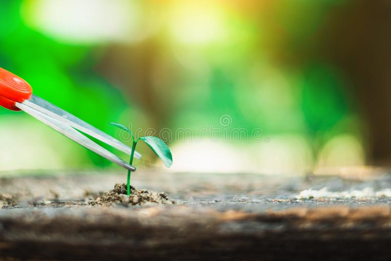 Sprout growing on ground and hand holding scissor going to cut it. Destroy new life and hope concept stock photos