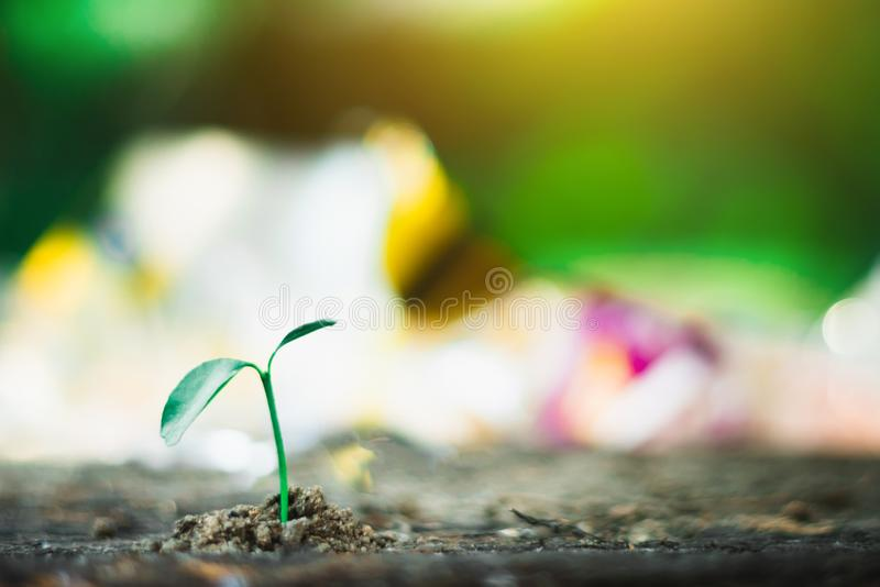 Sprout growing on ground royalty free stock photo