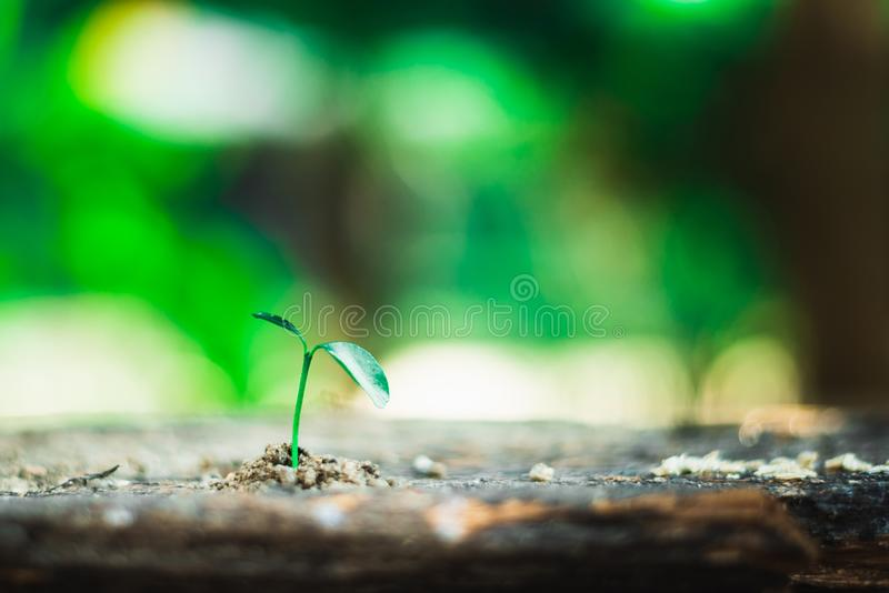 Sprout growing on ground stock photography
