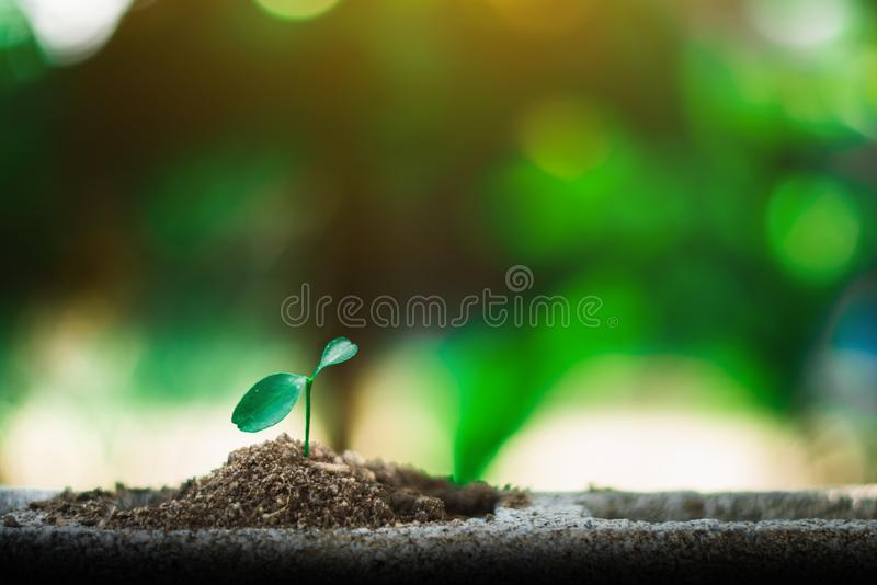 Sprout growing on ground. New life and hope concept royalty free stock image