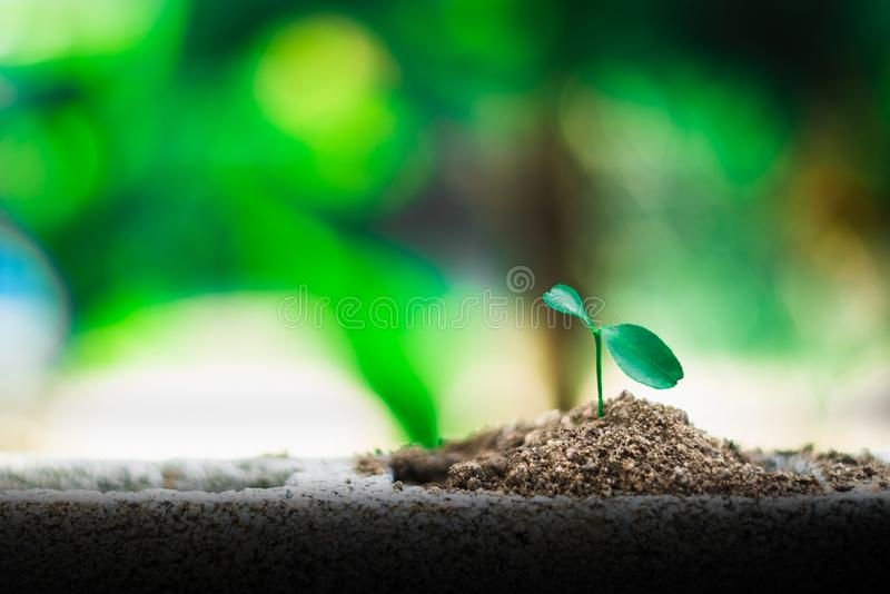 Sprout growing on ground. New life and hope concept royalty free stock photo