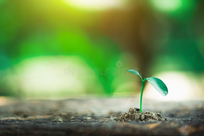 Sprout growing on ground. New life and hope concept royalty free stock photos