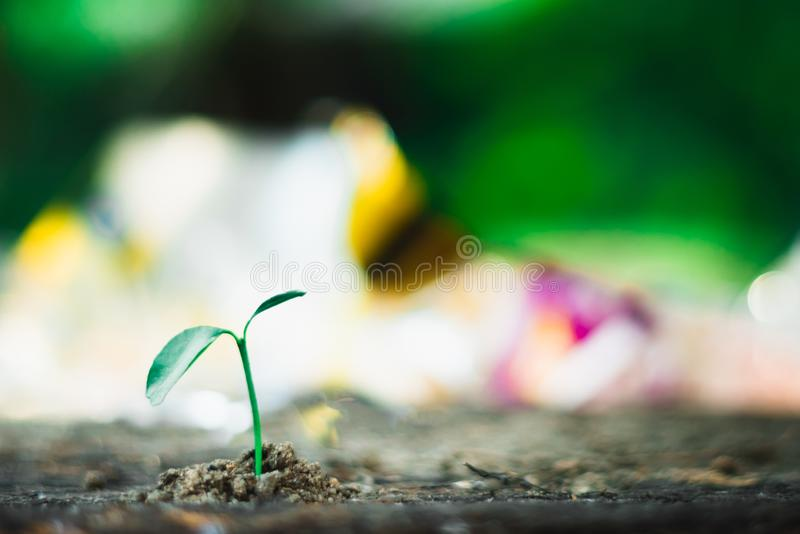 Sprout growing on ground. New life and hope concept stock image