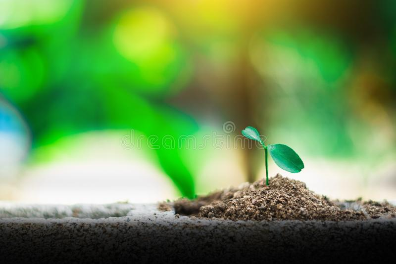 Sprout growing on ground. New life and hope concept stock photography