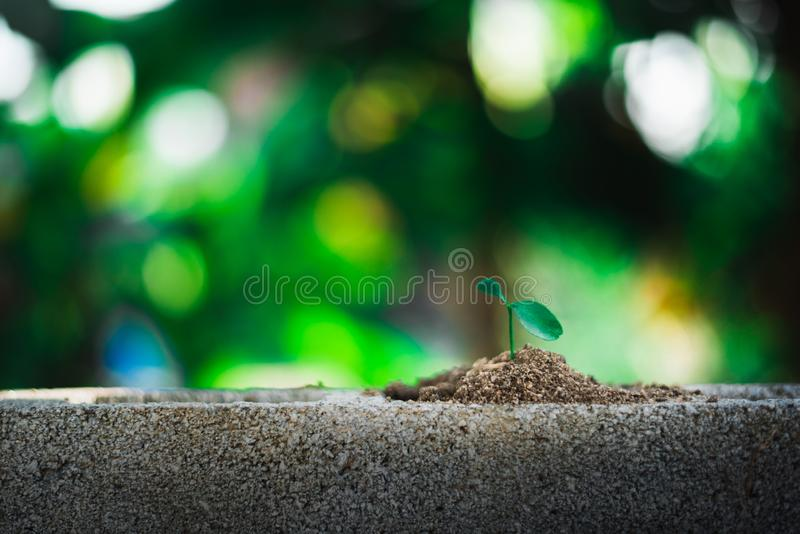 Sprout growing on ground. New life and hope concept stock photo