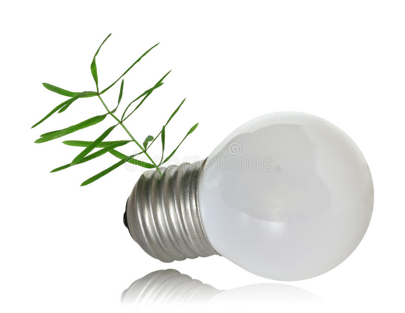 Download Sprout Growing Out Of The Light Bulb Base Stock Photo - Image of conceptual, base: 24541462