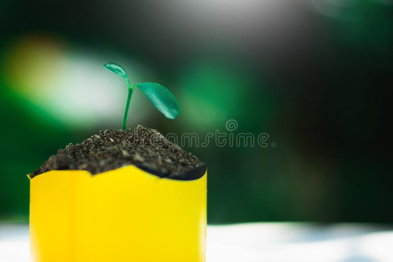 Sprout growing in small pot. Nature and care concept stock photo