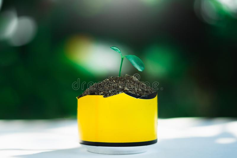 Sprout growing in small pot. Nature and care concept stock photography