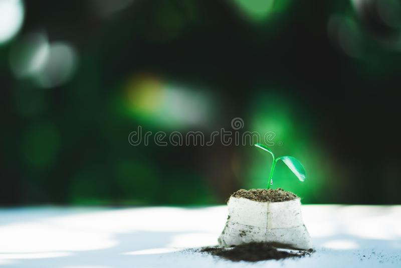 Sprout growing in small pot. Nature and care concept royalty free stock images