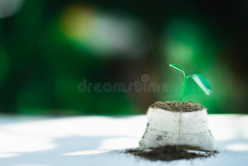Sprout growing in small pot. Nature and care concept stock photos