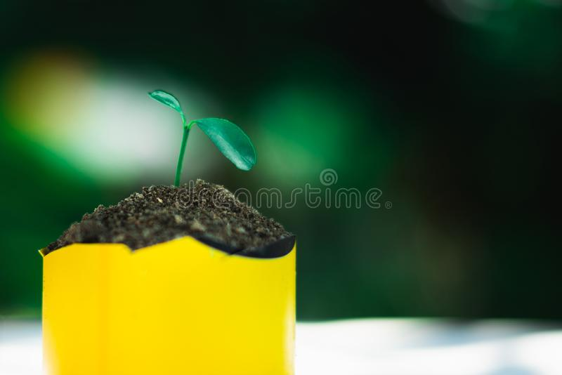 Sprout growing in small pot. Nature and care concept royalty free stock photos