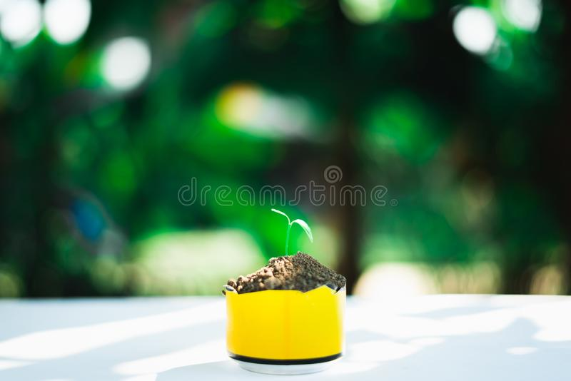 Sprout growing in small pot. Nature and care concept royalty free stock photo
