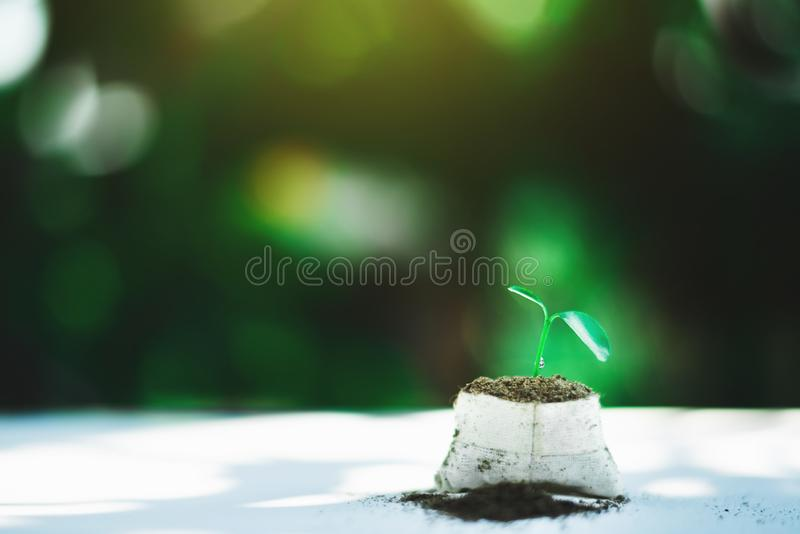 Sprout growing on ground stock photo
