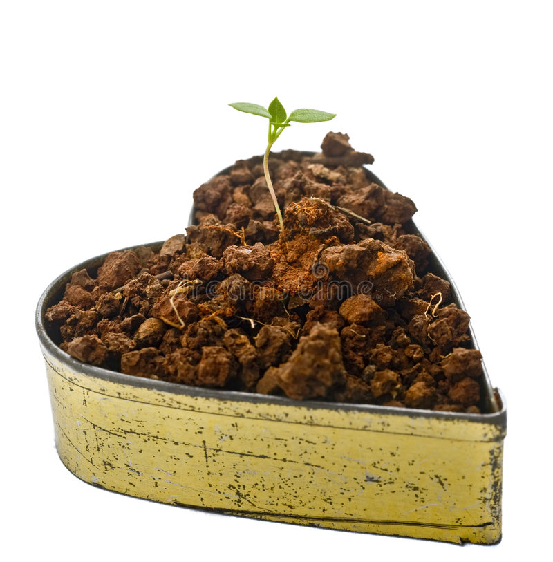 Sprout of love. Young sprout emerging from a heart shaped container with soil royalty free stock photos