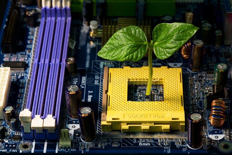 Sprout no computador fotografia de stock