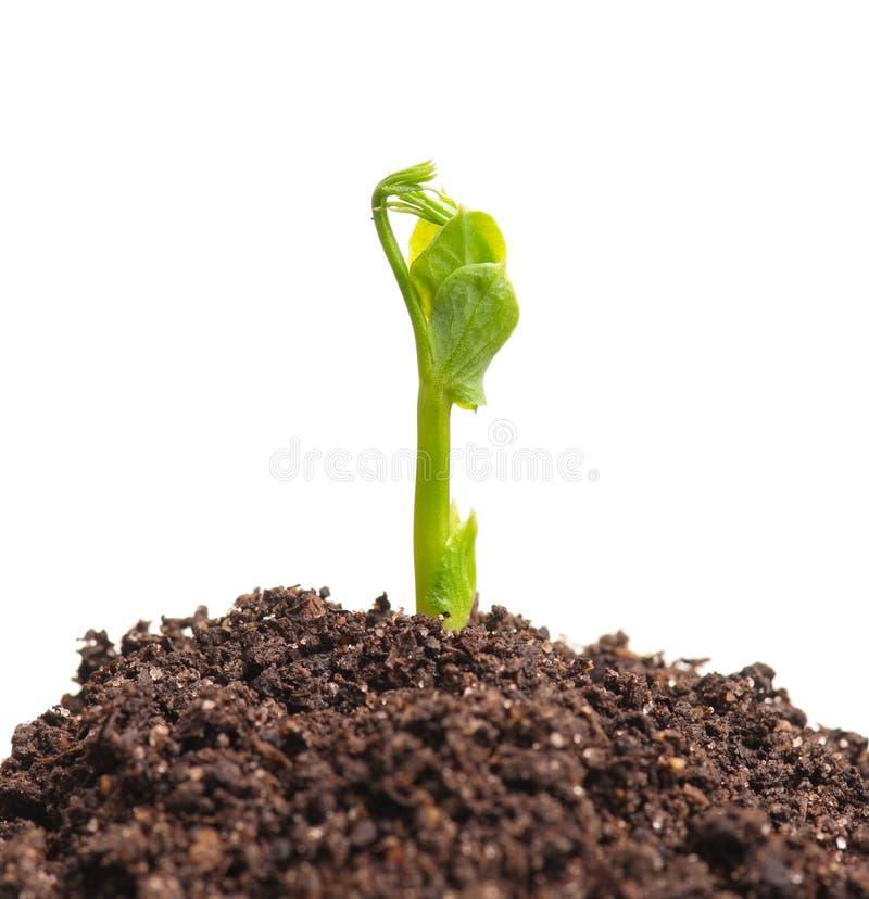 Sprout novo imagem de stock royalty free