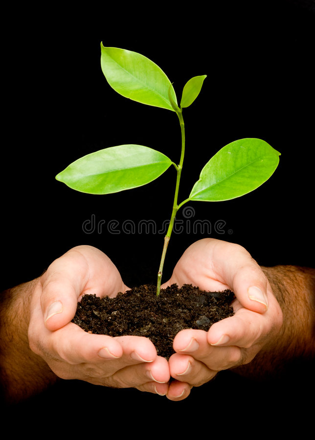 A sprout in palms stock image