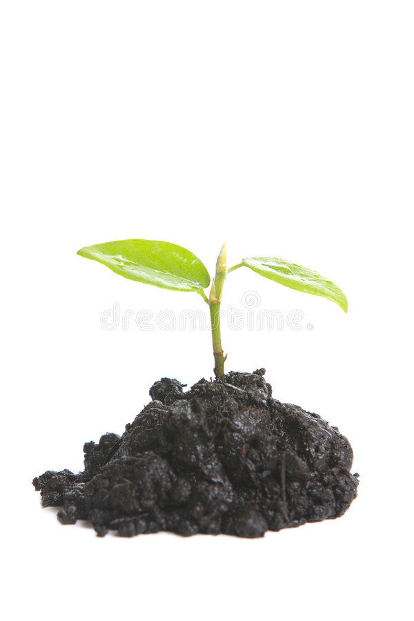 Sprout pequeno fotos de stock