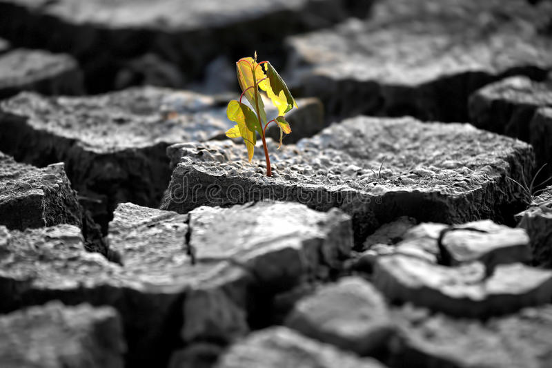 Sprout plants growing on very dry cracked earth stock photo