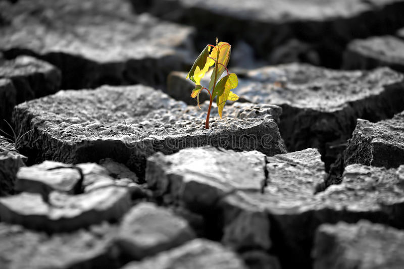 Sprout plants growing on very dry cracked earth royalty free stock image