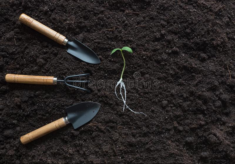 Sprout with roots and garden tools laid out on a soil background stock photography