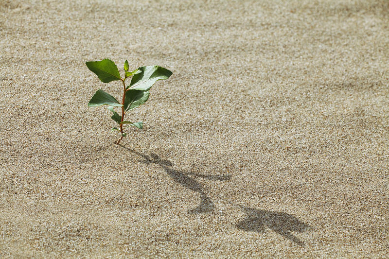 Download Sprout in the sand stock image. Image of development - 24453695