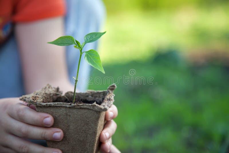 Download Sprout verde imagem de stock. Imagem de ambiental, mão - 107528383