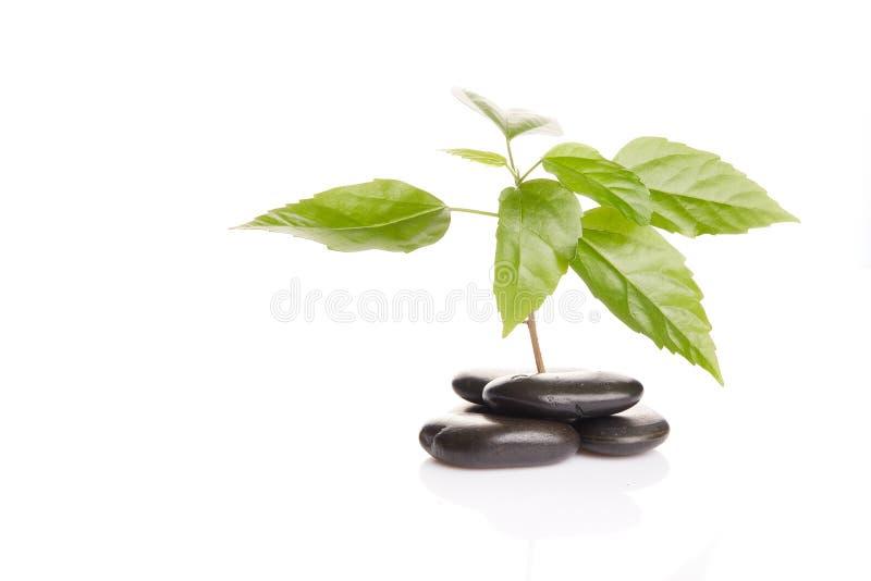 Sprout verde pequeno entre pedras imagem de stock