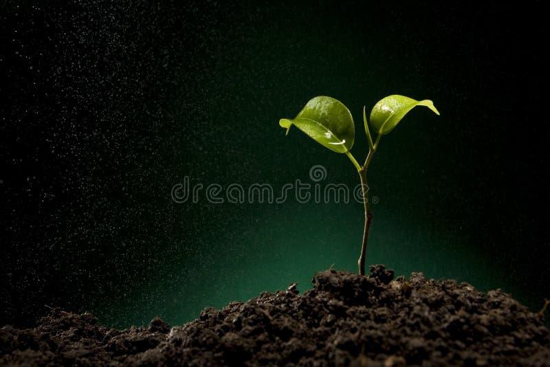 Download Sprout Verde Que Cresce Do Solo Imagem de Stock - Imagem de espaço, vida: 10061975