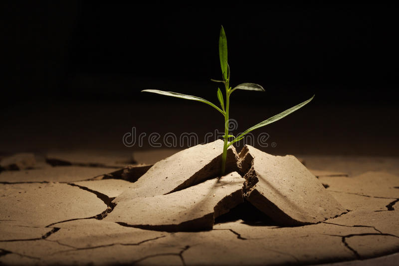 Sprout vine. In droughty ground stock photography
