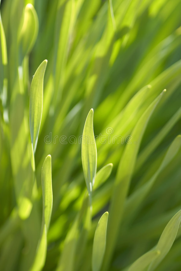 sprout wiosny fotografia royalty free