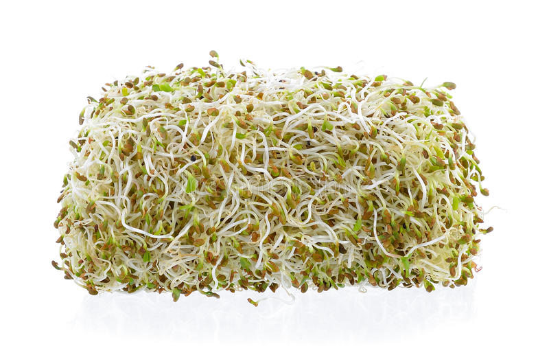 Sprouted alfalfa seeds. On a white background stock images