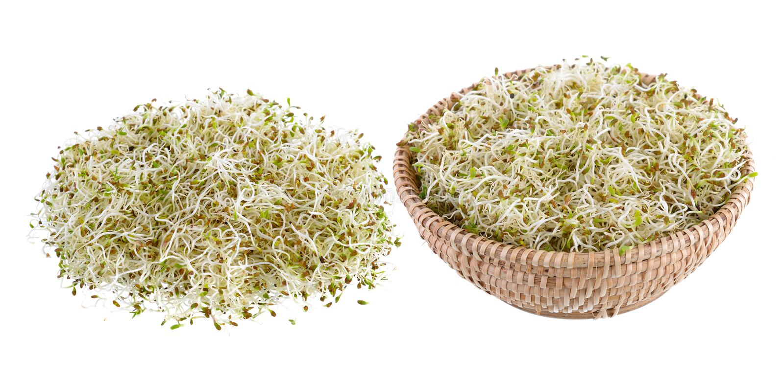 Sprouted alfalfa seeds. On a white background stock image