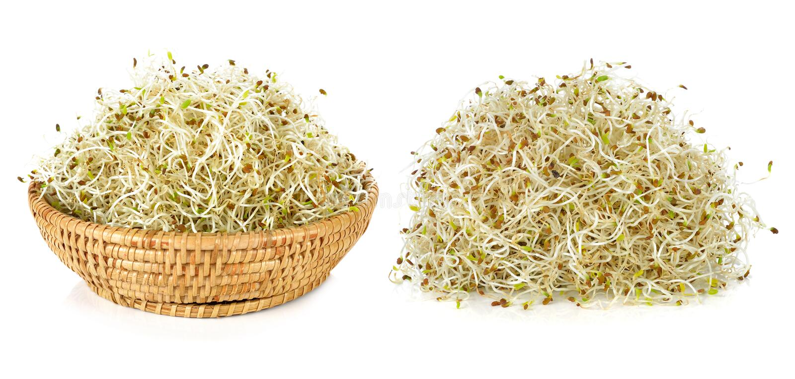 Sprouted alfalfa. On a white background royalty free stock images