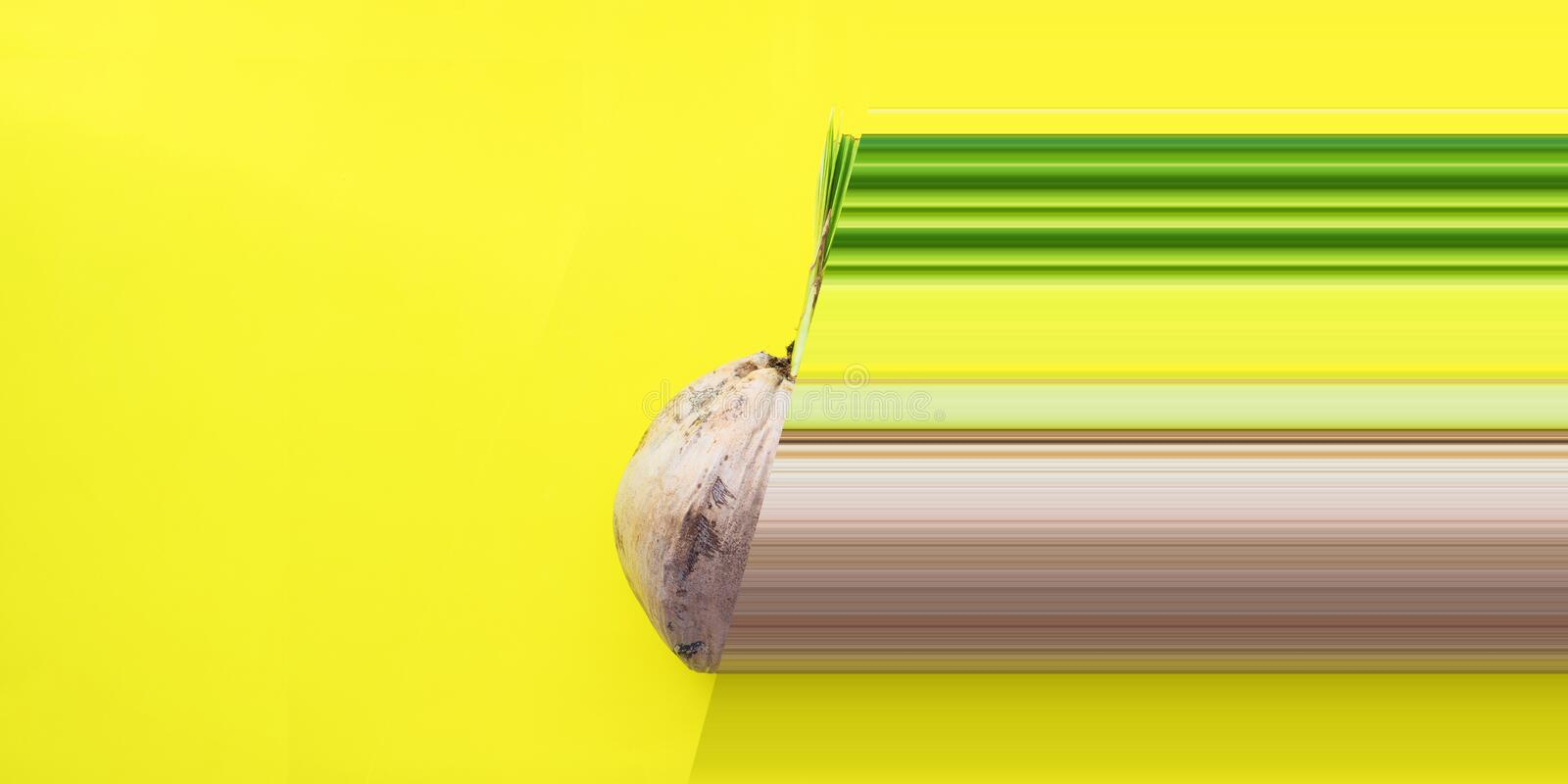 Sprouted brown coconut thick crust shell Yellow. Sprouted brown coconut stiff thick crust shell Yellow background Palm seed tree product in domestic economic stock images