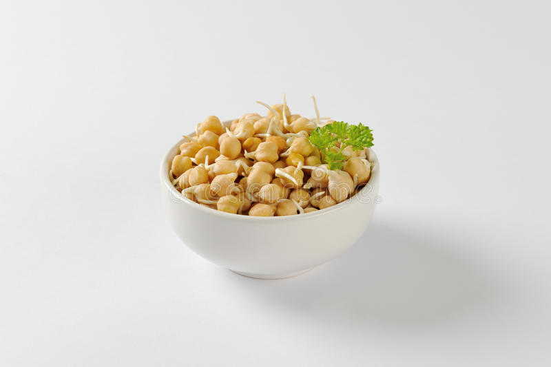 Sprouted chickpeas. Bowl of sprouted chick peas stock photography