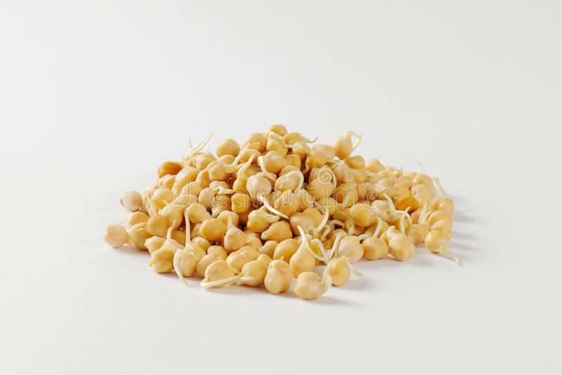 Sprouted chickpeas stock photo