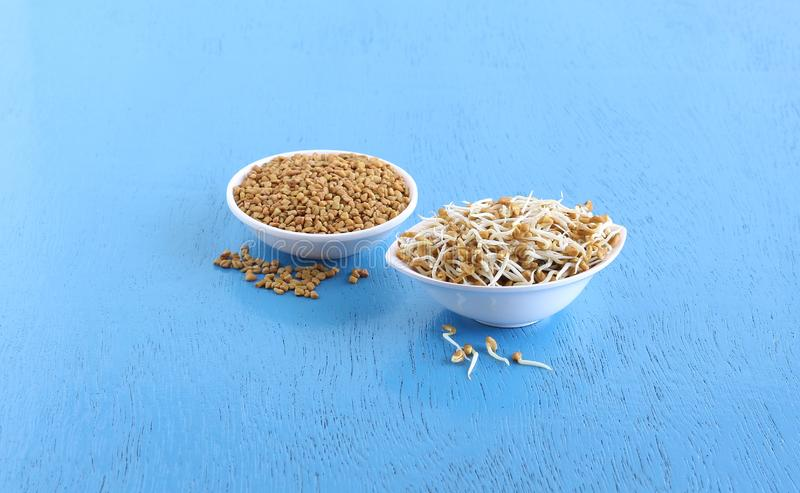 Healthy Food Sprouted Fenugreek Seeds. Sprouted fenugreek seeds, which are a healthier food, and regular fenugreek seeds in bowls stock photography