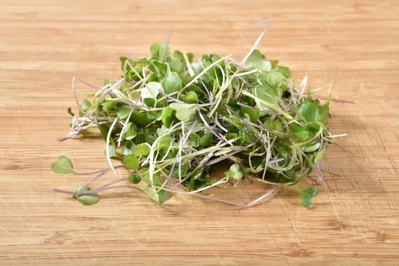 Sprouted fresh micro-greens royalty free stock images