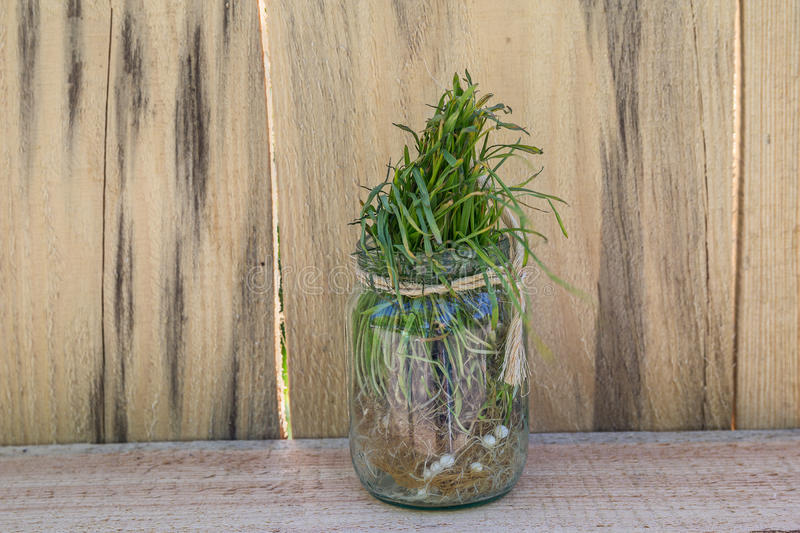 Sprouted grass in a glass jar. Decoration stock images