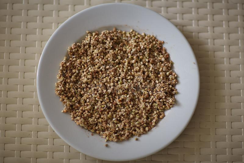 Sprouted green buckwheat on a plate stock photography