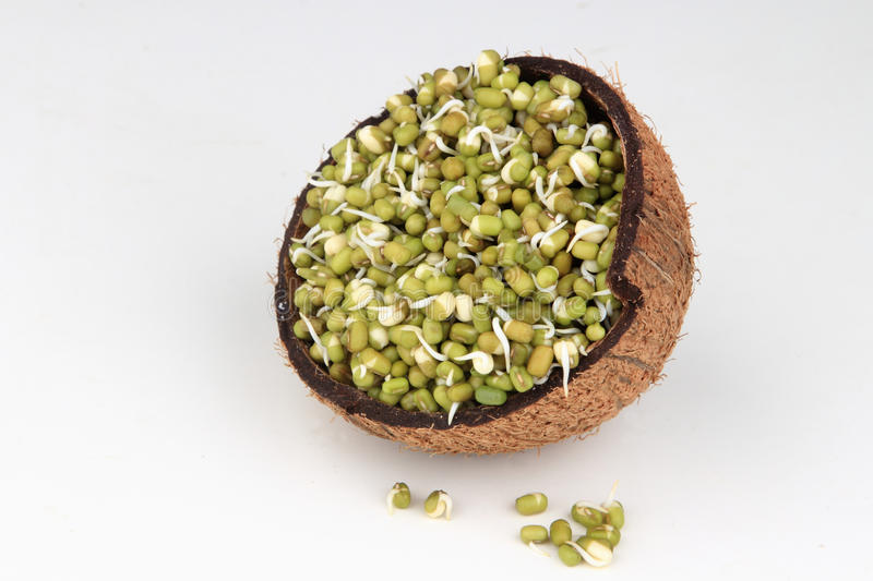 Sprouted Green gram. On a coconut shell royalty free stock image