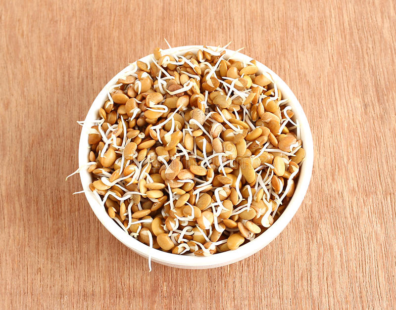 Sprouted Horse Gram. Healthy food sprouted horse gram in a bowl stock photography